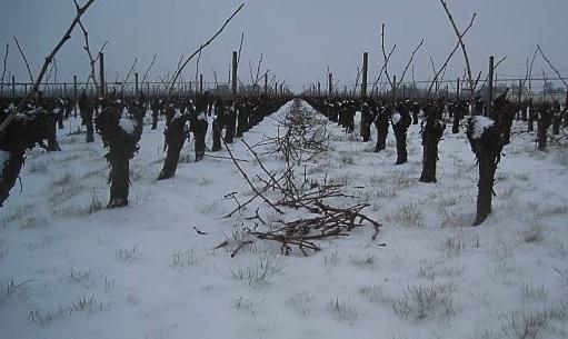 Finland wine