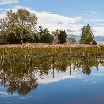 The Bisol vineyards underwater (Image © Mattia Mionetto)