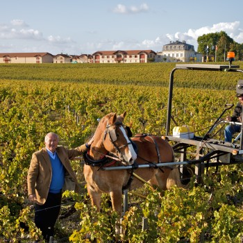 Pontet-Canet owner Alfred Tesseron with one of the estate's horses