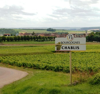 A 'very good' 2015 Chablis vintage has been reported, with 'fruitiness' making the wines more 'accessible' (Photo: BIVB)