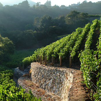 Moraga vineyard (Image credit: Moraga Estate)