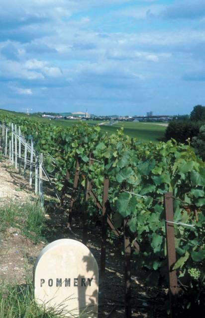 Pommery-Vineyards