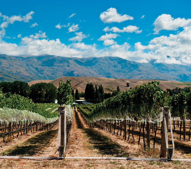 Pinot Plantings in Central Otago