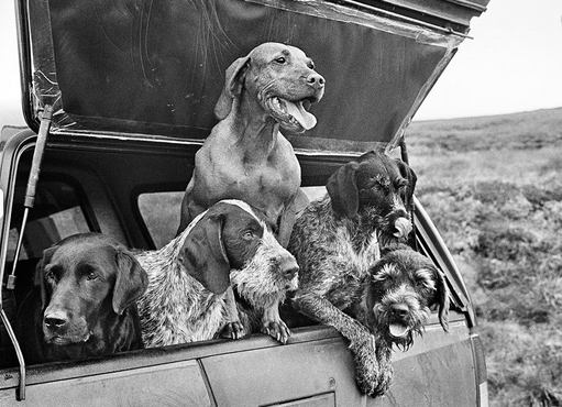 the life and works of the photographer elliot erwitt Basically i am professional photographer, who works on commands of clients   elliott erwitt is considered to be one of the world's best-known photographers   most popular and very different images from erwitt: there are portraits of famous.