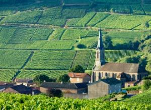 bourgogne-wine-region
