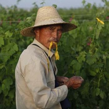 china wine worker