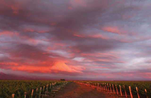 Argentina-Vineyard-Sunset
