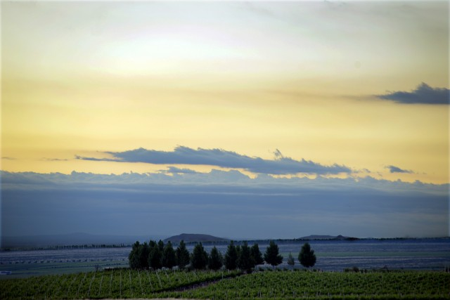 10 Vines in the Uco Valley making up part of the Alpasion estate