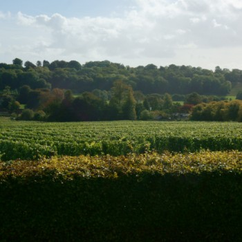 Hambledon Vineyard in Hampshire