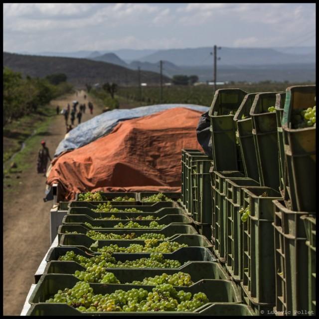 9-Ethiopia-harvest-cession-part-2-at-Awash-wines1-1024x1024
