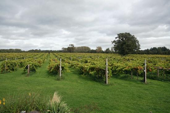Wickham Vineyard in Hampshire