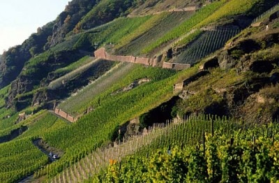 The famous terraces of the Mosel are covered by the new legislation.