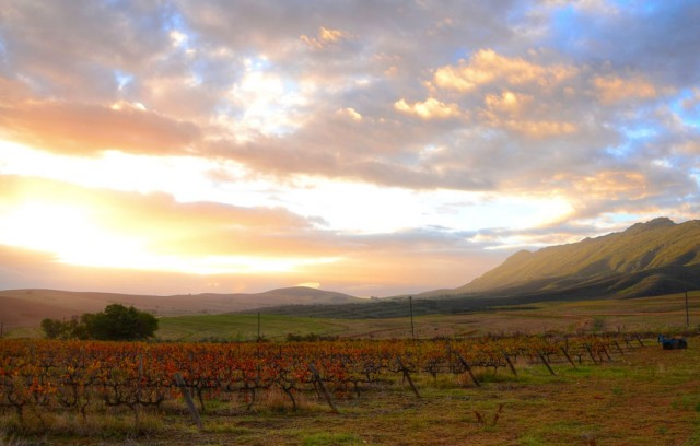 Chinese investor buys Swartland Winery