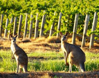 wine-australia