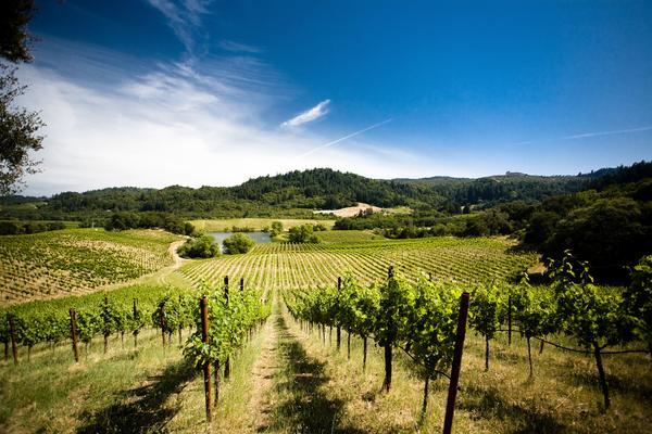 Wine-Vinyard-Sonoma