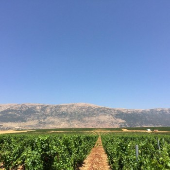 """Chateau Marsyas: The former """"no man's land"""" in the Bekaa Valley"""