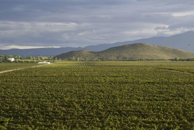 atardecer tiempo de cosecha  vinicola san lorenzo-® jes+¦s l+¦pez casa madero _2