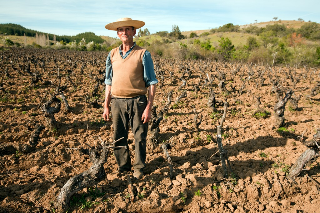 Don Nivaldo in his Maule vineyard