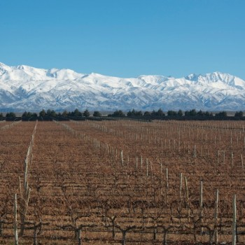 Argentina is the global centre of Malbec production, with Mendoza by far the biggest producing region (Photo: Flickr)