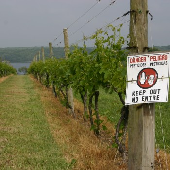 A sign warning that pesticides have been used in a vineyard (Photo: Wiki)