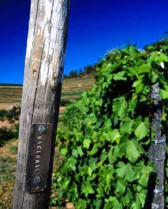 Nacional vineyard