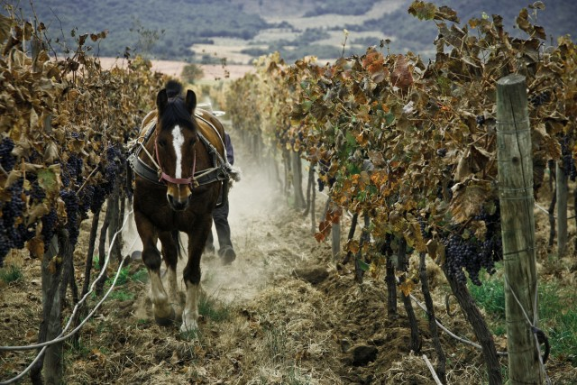 ASC Fine Wines co-founder steps down