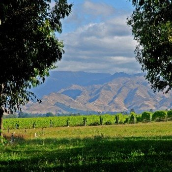 The first ever International Sauvignon Blanc celebration takes place in Marlborough, New Zealand from February 1-3 (Photo: Flickr)