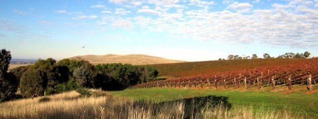 Colbinabbin Vineyard, Heathcote (Photo: Chalmers Family Wines)