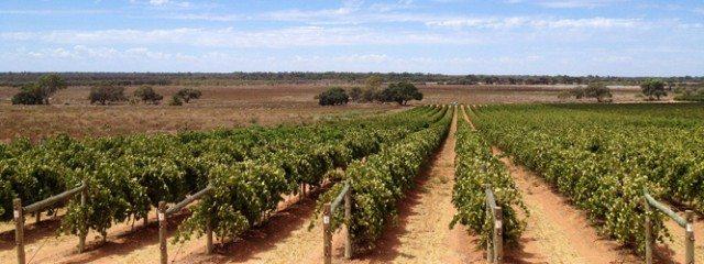 Merbein Vineyard, Murray Darling (Photo: Chalmers Family Wines)