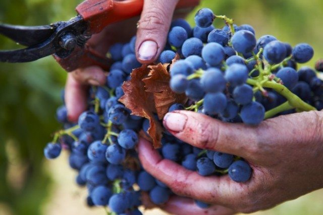 The best-selling Spanish wine brands in UK retailers