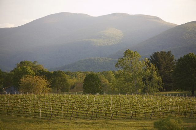 Veritas Vineyard and Winery in Virginia hopes to make an impact in the UK market with its single-varietal Petit Verdot (Photo: New Horizon Wines)