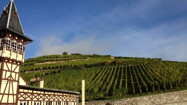 Photo: (Domaine Trimbach)