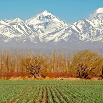 Argentina-Mendoza-Vineyard-with-Mountain-View
