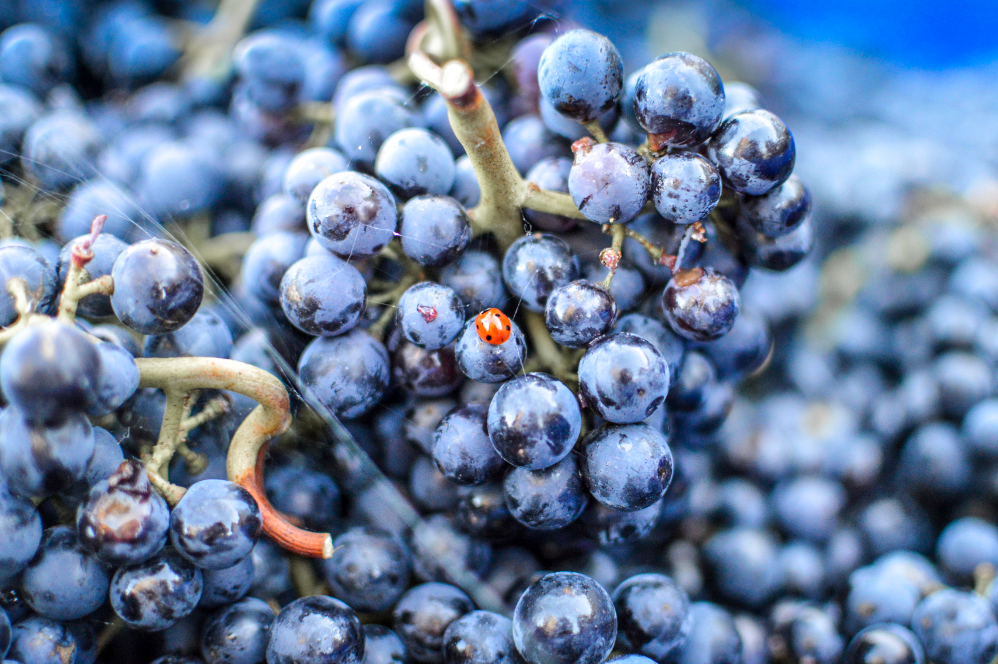 Record year: English and Welsh wine producers comment on