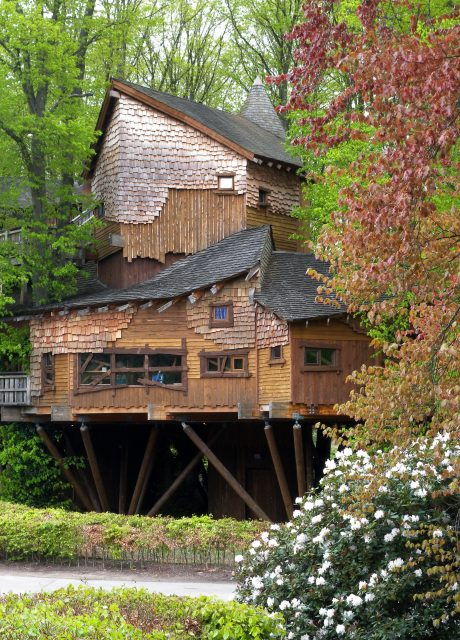 World S Largest Treehouse Restaurant Relaunches