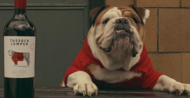 Global Wine Brand Tussock Jumper Considers Adding An English Fizz To The Mix With A Label Featuring Bulldog In Red Sweater