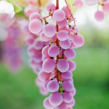 Everything you need to know about Koshu from Japan