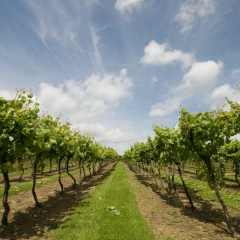 Record 15.6m bottles of wine produced in England and Wales last year