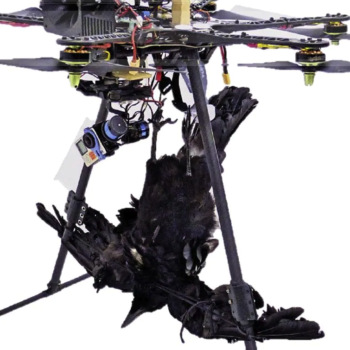 New bird-scaring drone with dummy crow being trialled in vineyards
