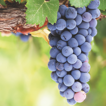 10 outstanding Pinot Noirs from £10-50