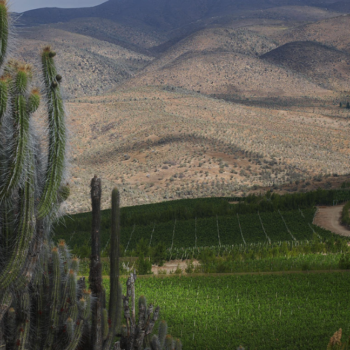 Champagne Thiénot to release sparkling wine from Chile