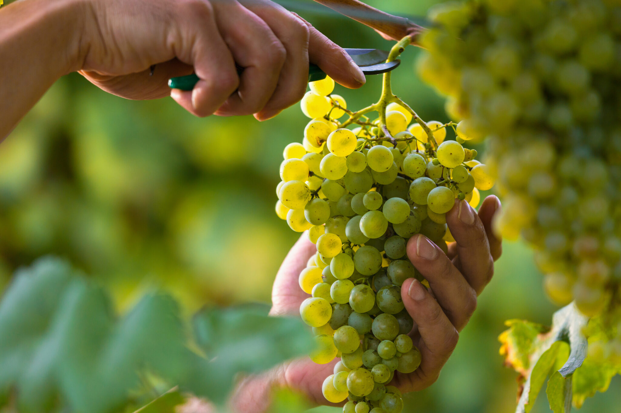 EU announces 'exceptional' support measures for wine sector