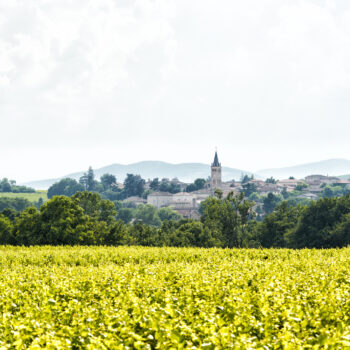 Beaujolais exports rise by 120% in May