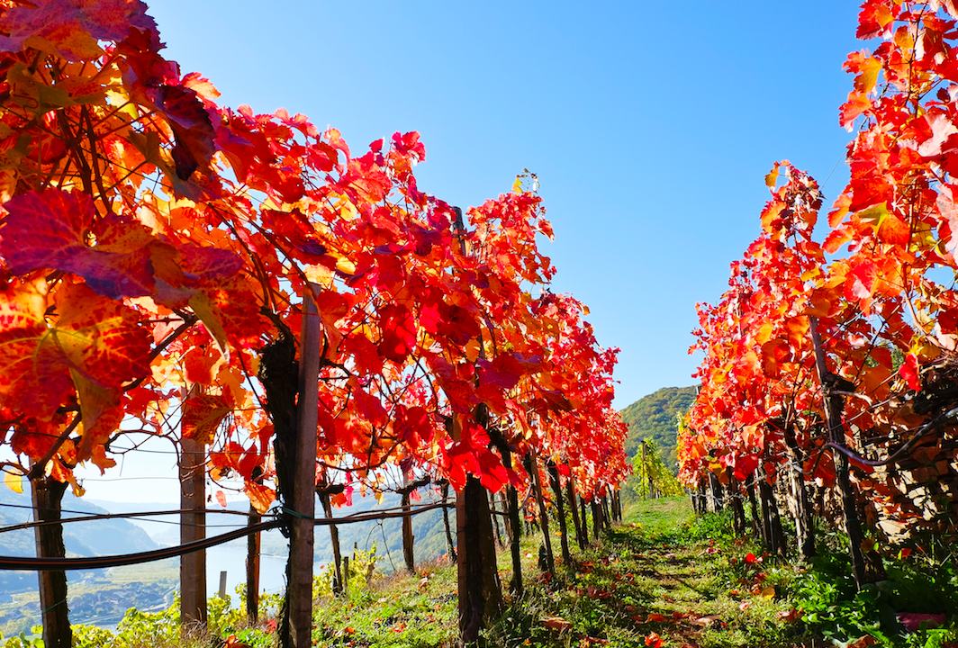 The best wines from The Autumn Tasting 2020 - The Drinks Business