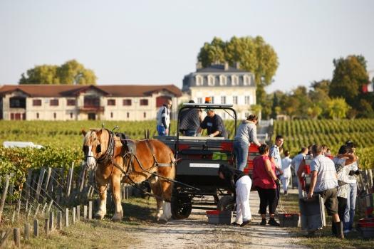 Pontet-Canet_Horse harvest