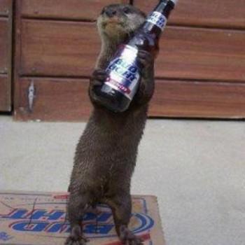 cat beer bottle animal - photo #28