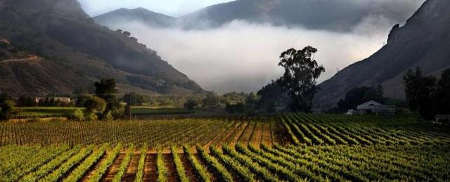 Bien Nacido Vineyard, where Qupé has its winery