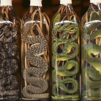 snake_wine-350x350