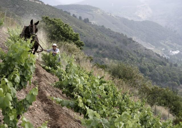 Palacios' Moncerbal vineyard in Bierzo