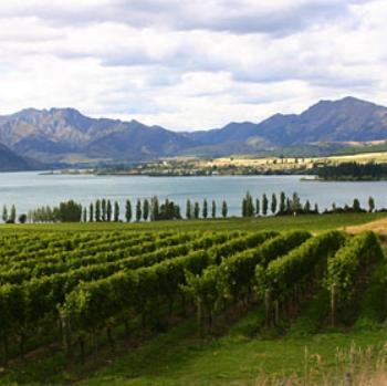 NZ-wine